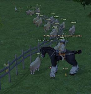 stuck_sheep